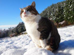 2016.11.25季節外れの大雪の翌日
