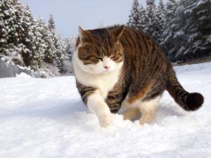雪中行軍のゴン