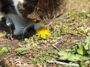 春の香りがするニャ〜