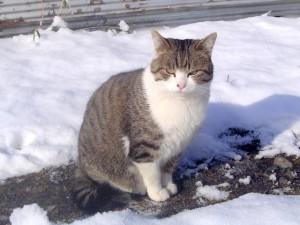 雪の降った翌朝のゴン